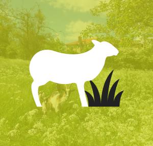 ENVIRONNEMENT / AGRICULTURE / ECOPAYSAGE / DÉVELOPPEMENT DURABLE